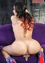 Beautiful Domino Presley returns! This stunning Grooby girl is a superstar and it's easy to see why! Domino has a gorgeous face, a magnificent bo
